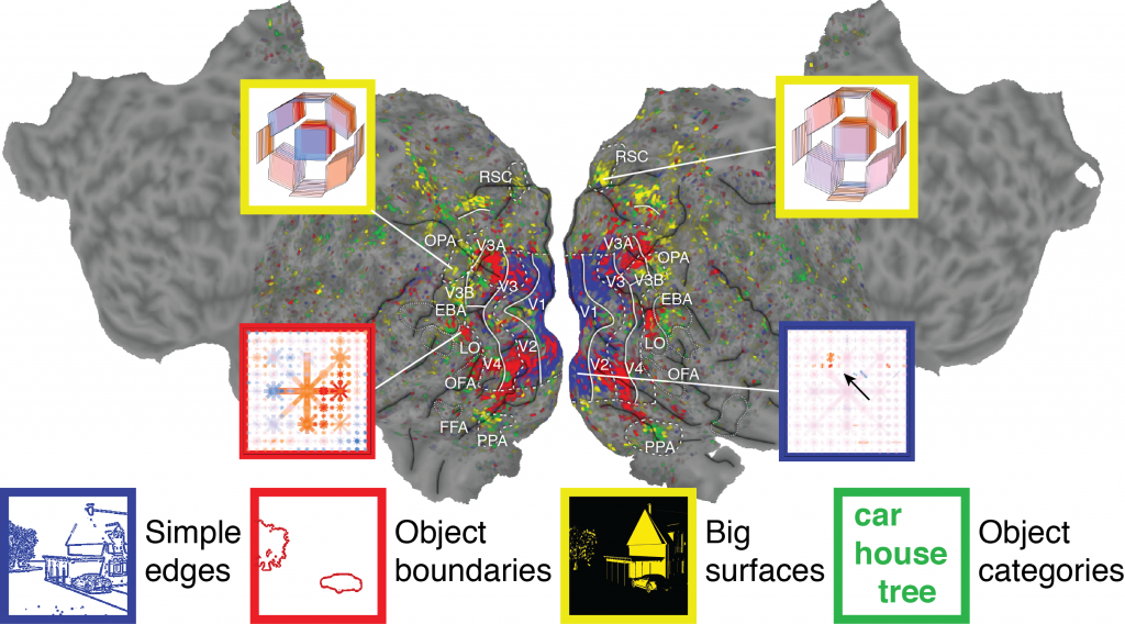 Flattened map of the cortical surface of a brain. Colors on the brain indicate where different types of information are represented - blue for simple textures and edges, red for boundaries of objects, yellow for large surfaces, and green for visual semantic categories. Insets depict the specific features for which a given part of the brain is selective. For example, one inset shows specific 2D locations of edges to which one part of the brain responds.